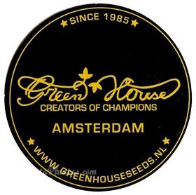 Green Horse SEEDS