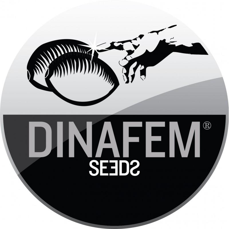 Dina Fem